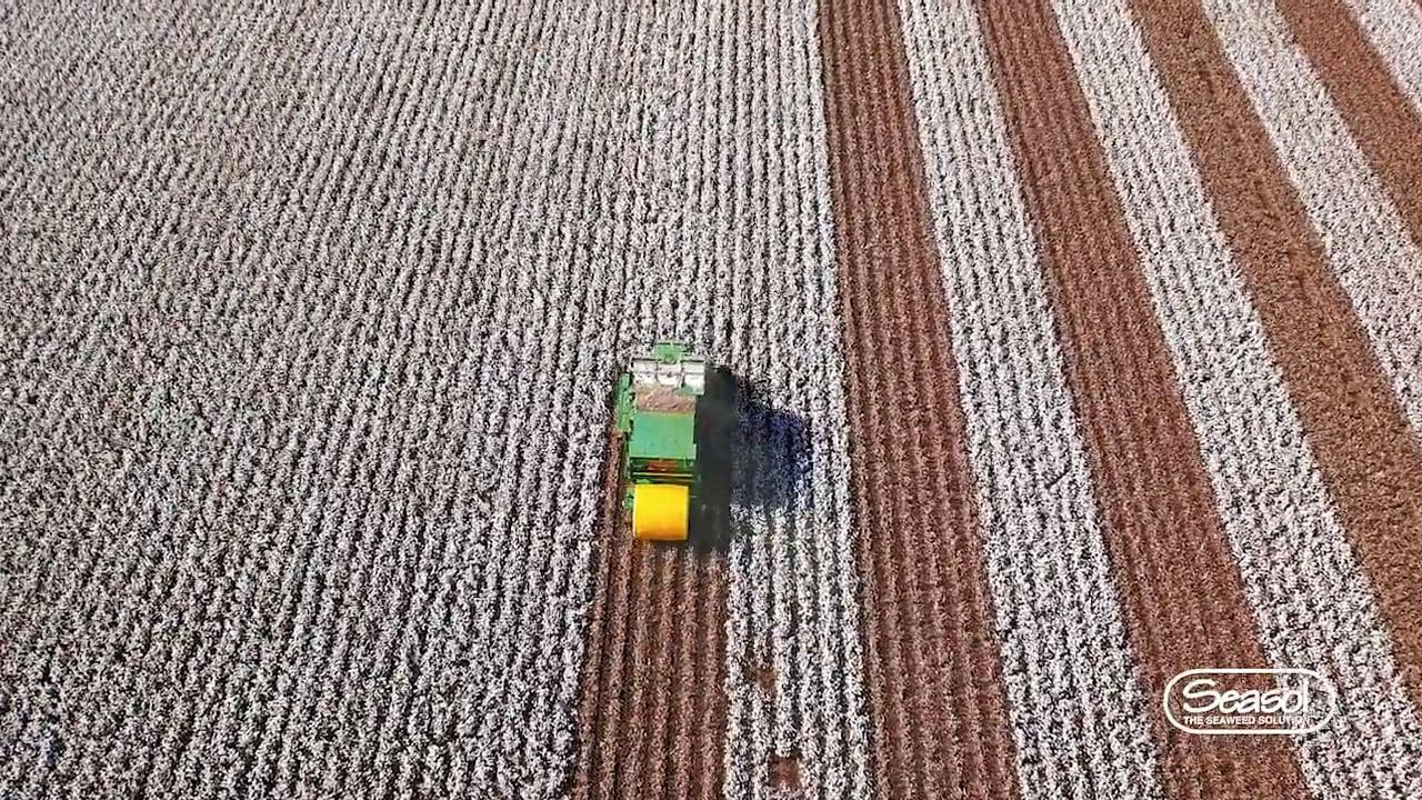 Seasol Cotton Fields
